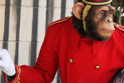 Banksy-singe-chimapnze-groom-livree-thewalledoffhotel-art-bethlehem-mur-groom-singe-portier-cover_format_desktop_300dpi