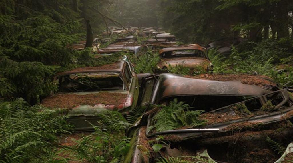 Mystérieux cimetière de voitures dans une forêt belge