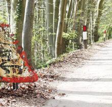 Dan Rawlings sculpte des forêts dans...