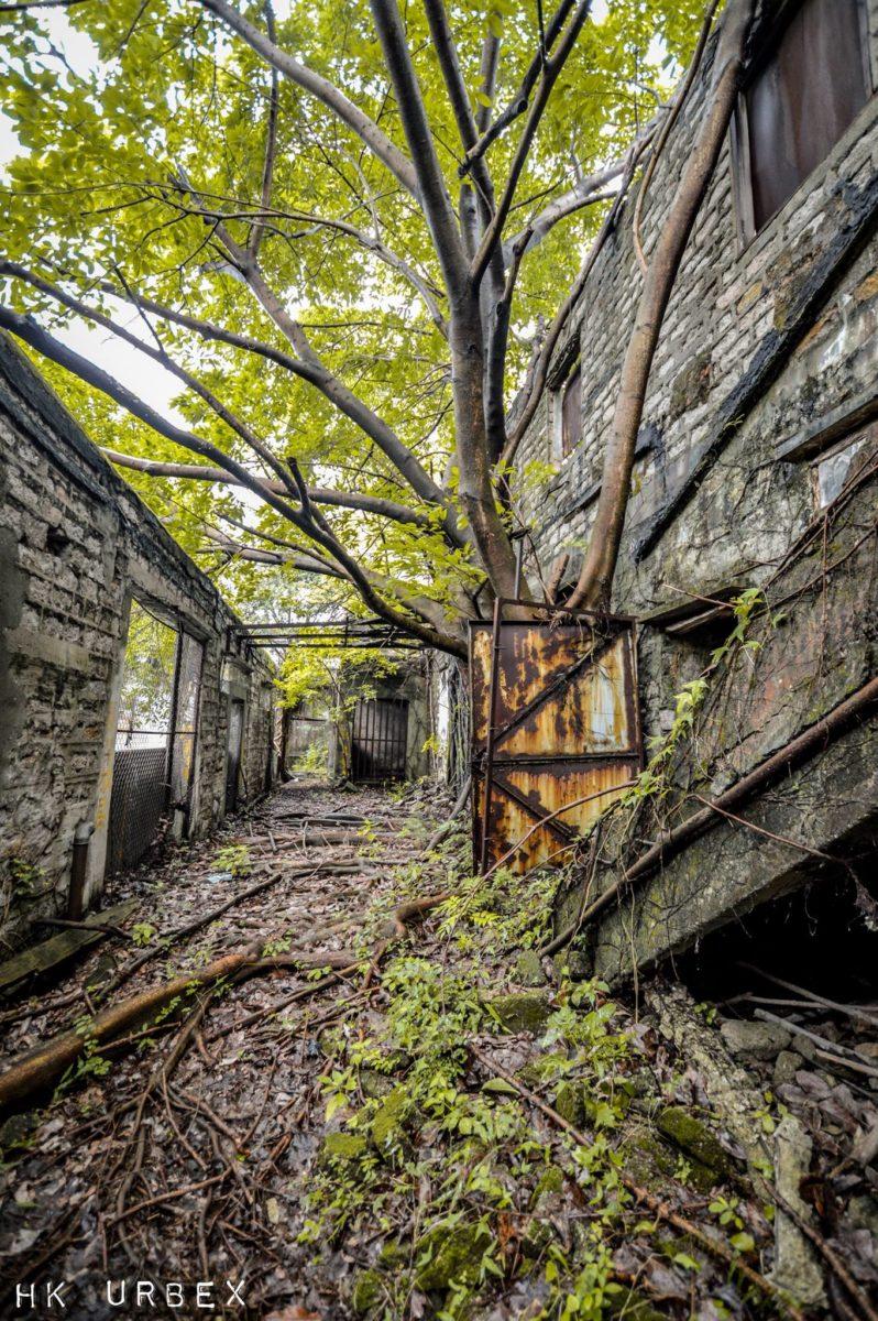 hk urbex exploration abattoir - Le collectif HK Urbex immortalise les lieux oubliés de Hong-Kong