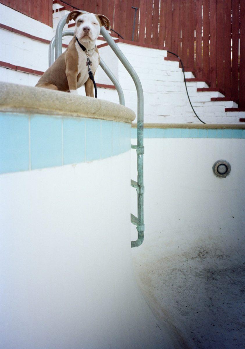 Tino Razo piscines urbex skate chien - Le skateur Tino Razo sillonne la Californie et photographie ses tricks dans des piscines abandonnées